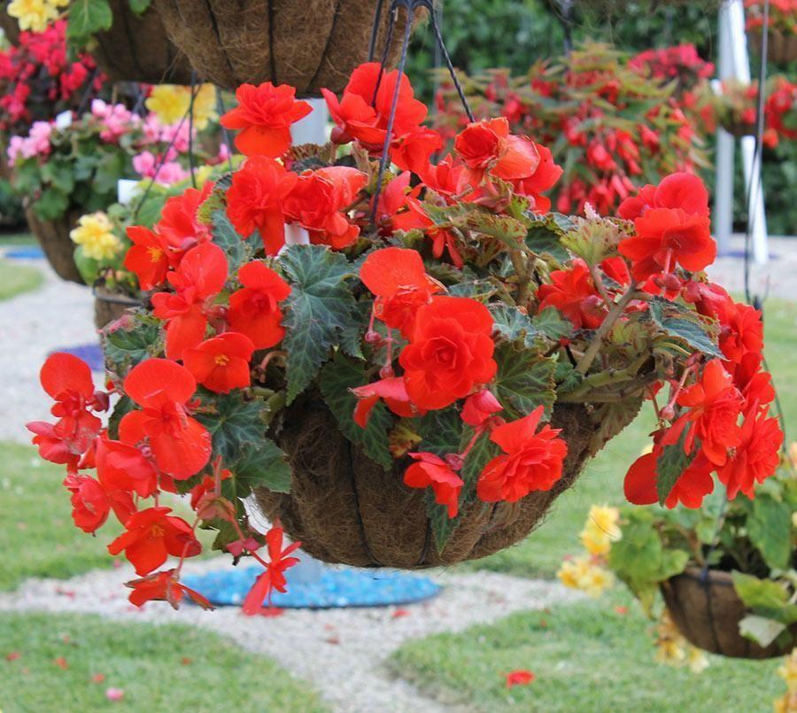Подвесное растение