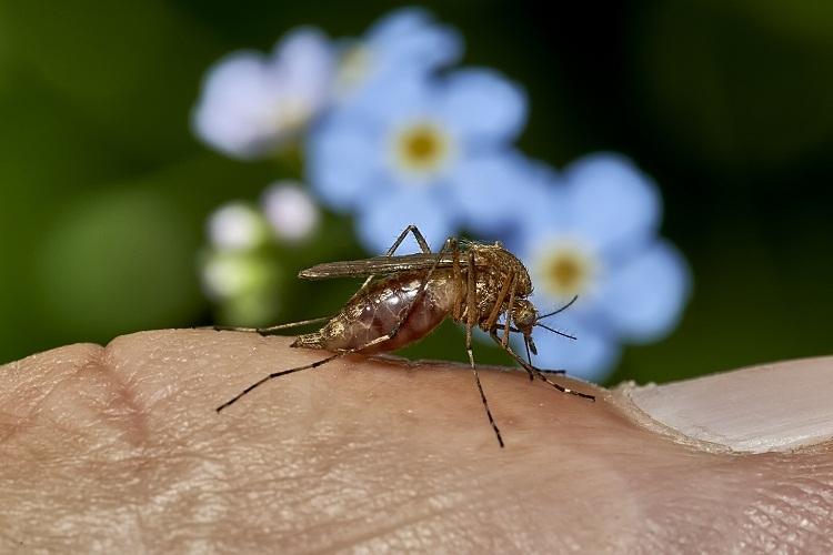 Некоторые ароматы и запахи комары не переносят