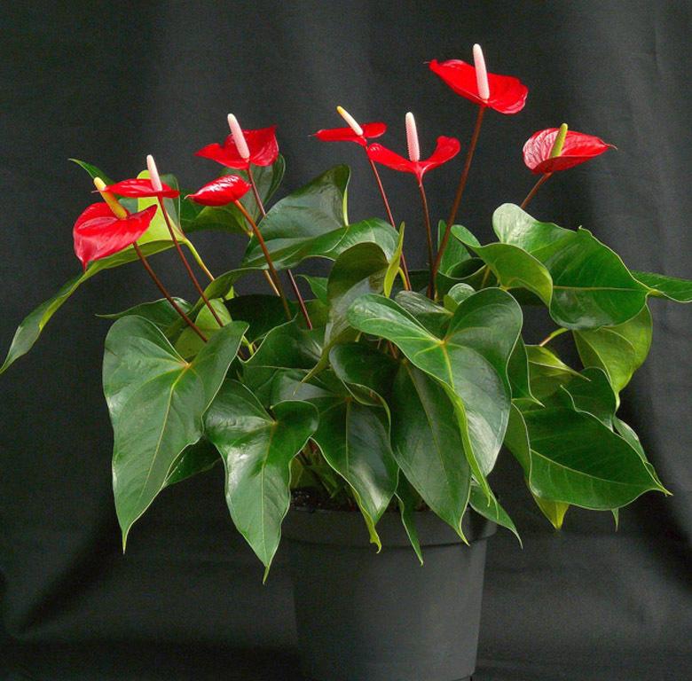 Только здоровое и ухоженное растение поможет решить проблемы в личной жизни