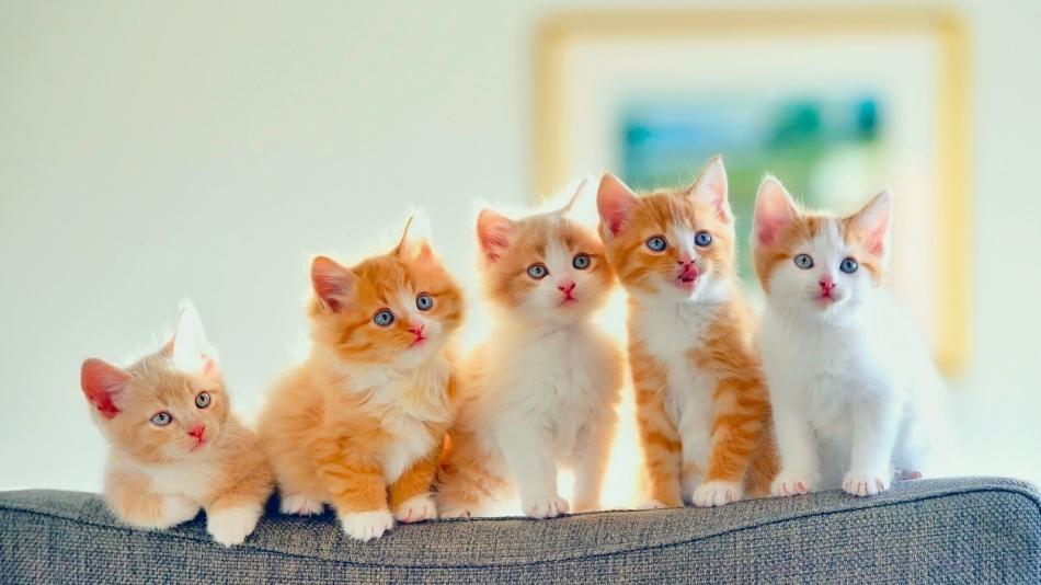 Рыжие кошки,как и рыжеволосые женщины, красивые, яркие и жизнерадостные