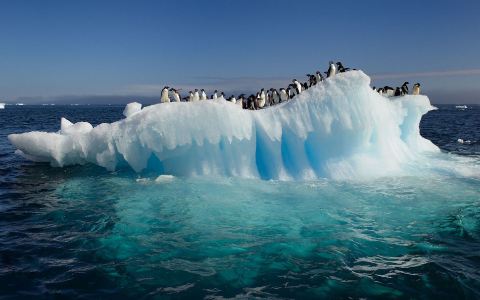Кто открыл антарктиду
