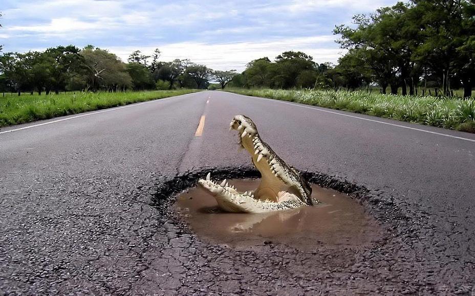 Женщине приснился крокодил