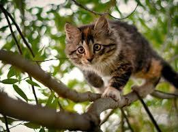 кошки - настоящие хищники