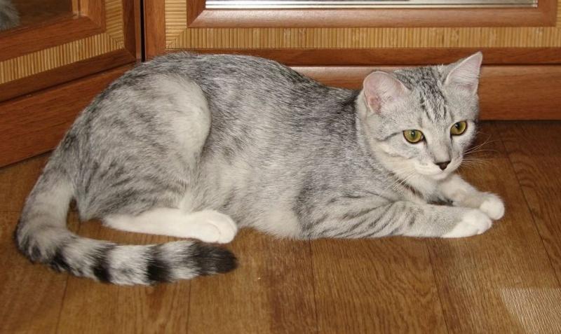 Кошки часто метят мебель.
