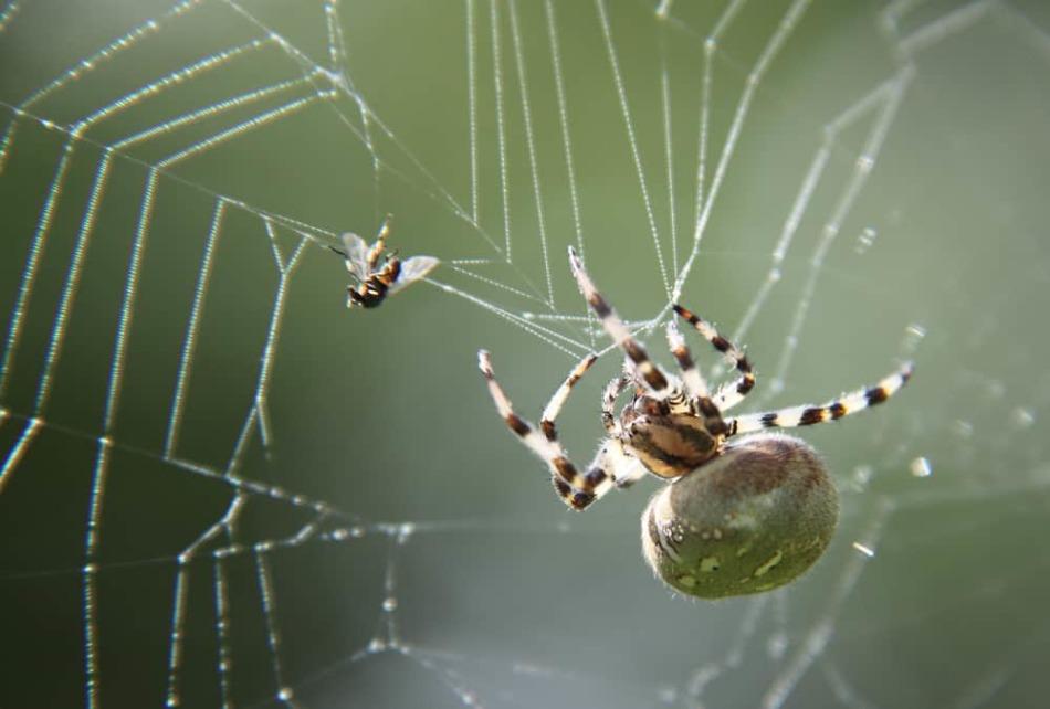 Сон о плетущем паутину членистоногом -