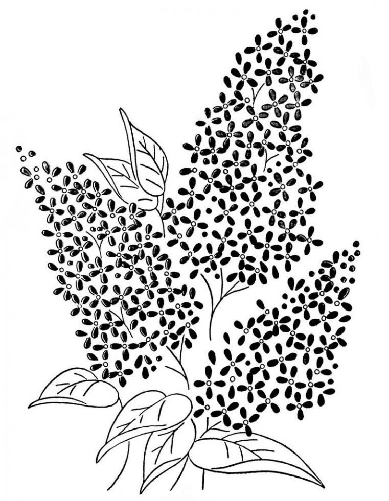раскраска цветки сирени текста графики