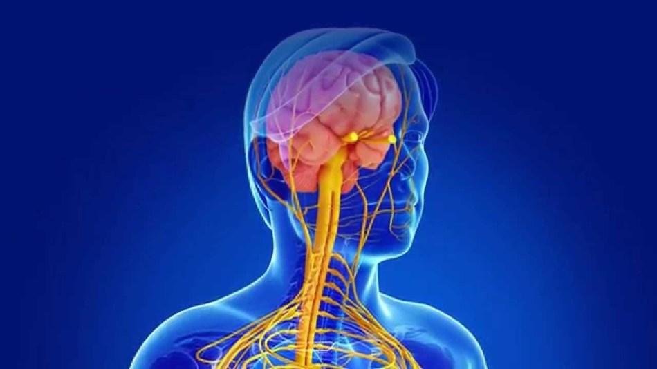 Мутации-гена-объясняют-причины-развития-рассеянного-склерозамутации-гена-объясняют-причины-развития-рассеянного-склероза