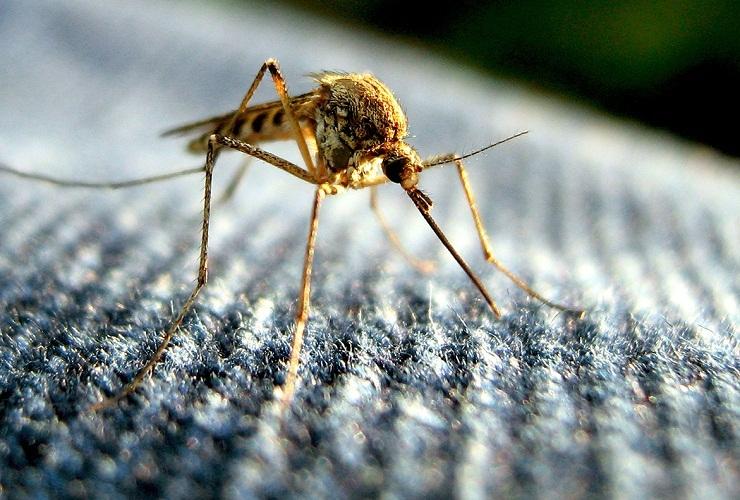 Комары даже отдают предпочтение темным и красным вещам