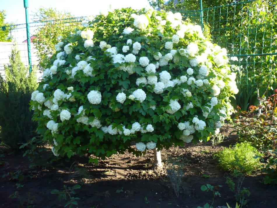 Белый кустарник