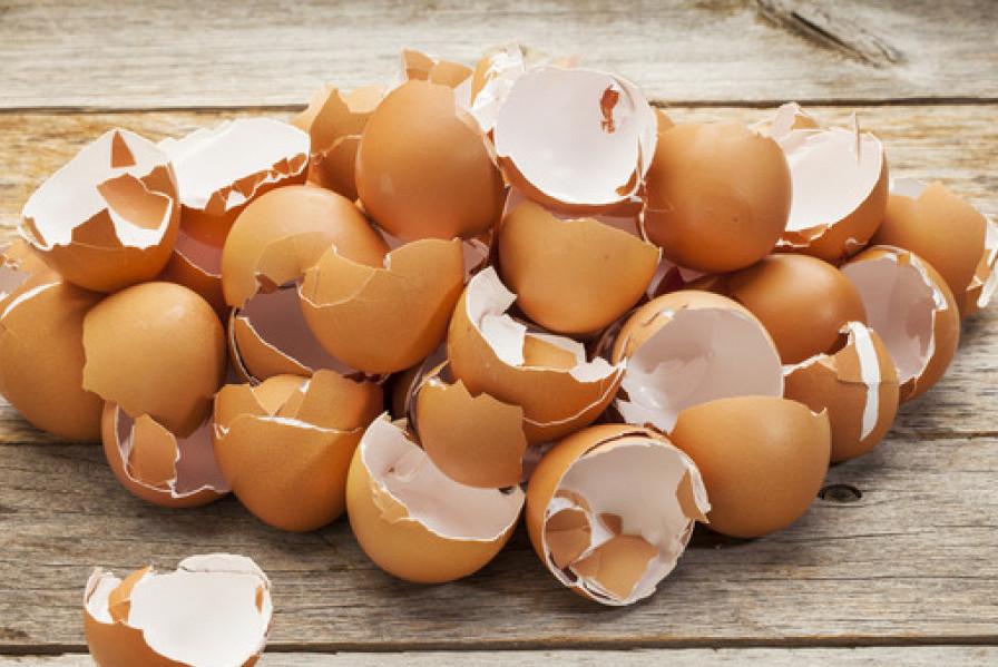 Яичная скорлупа для приготовления удобрения