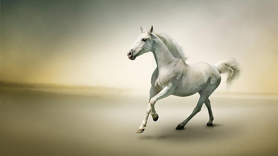 Сны, в которых вы увидели лошадь