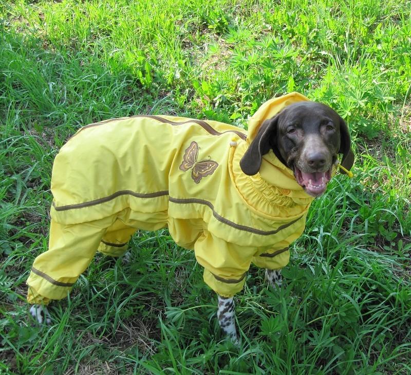 Собака в защитном костюме на прогулке
