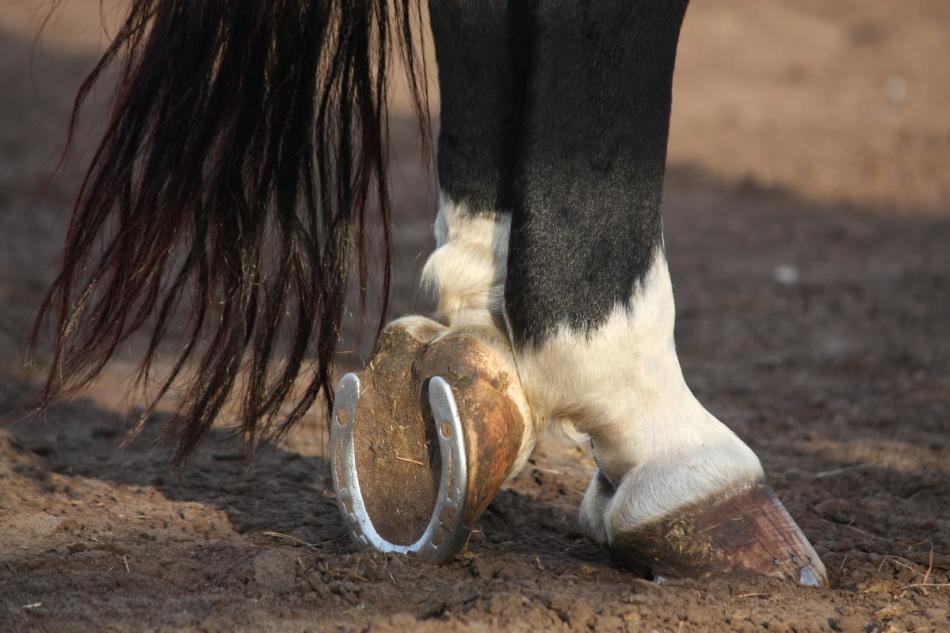 Подкова коня на удачу