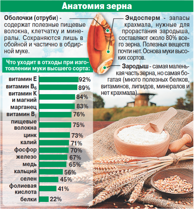 Анатомия зерна