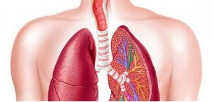 Лечение фиброза легких настойкой личинок восковой моли