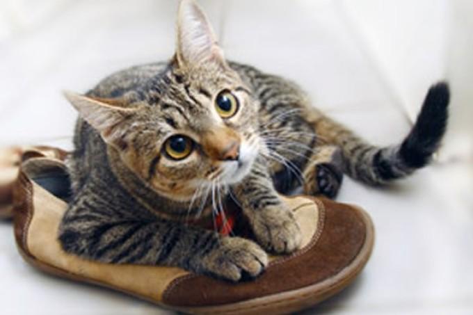 Кот обгадил обувь? ее нужно вымыть с хозяйственным мылом!