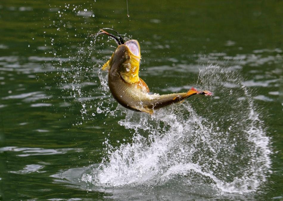 Ловить рыбу в реке во сне - к беременности.