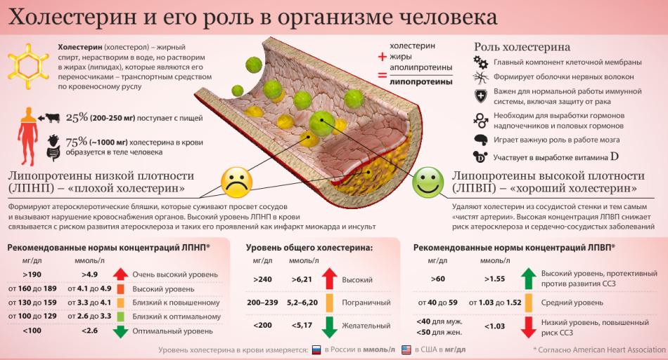 Холестерин и его роль в организме человека.