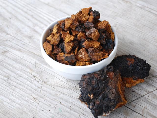 Березовый гриб чага: лечебные свойства, противопоказания, как приготовить и принимать в лечебных целях при разных болезнях