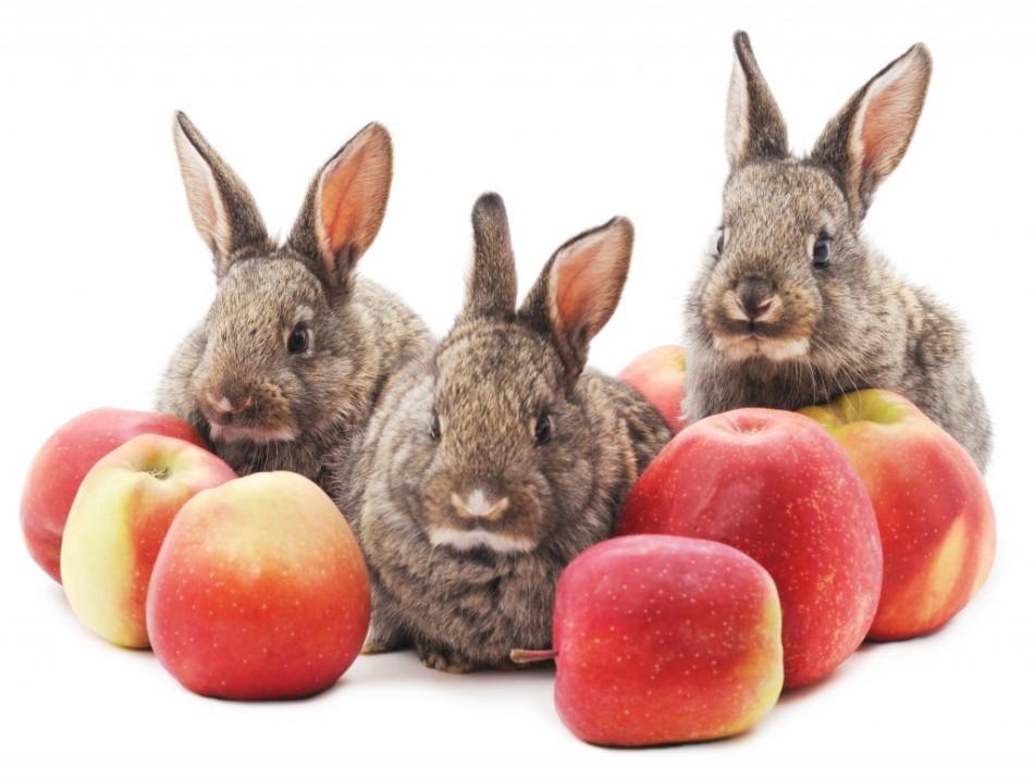 Декоративным кроликам можно предлагать свежие фрукты и овощи