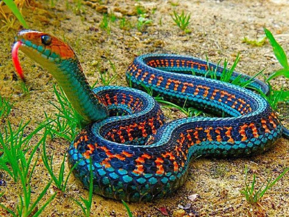 Змеи бывают агрессивными