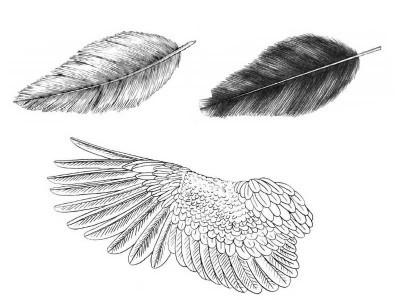 chtob-narisovat-sovu-mi-dolzhni-ponimat-strukturu-pera-i-krilev Как рисовать сову карандашом поэтапно для начинающих и детей? Как рисовать по клеточкам сову, красками?