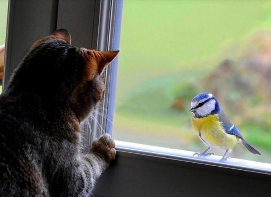 Может стучать в окно
