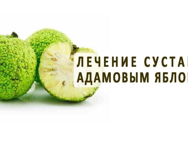 Народная медицина адамово яблоко рецепт настойки для суставов рецепт лазерная терапия для суставов в санкт-петербурге