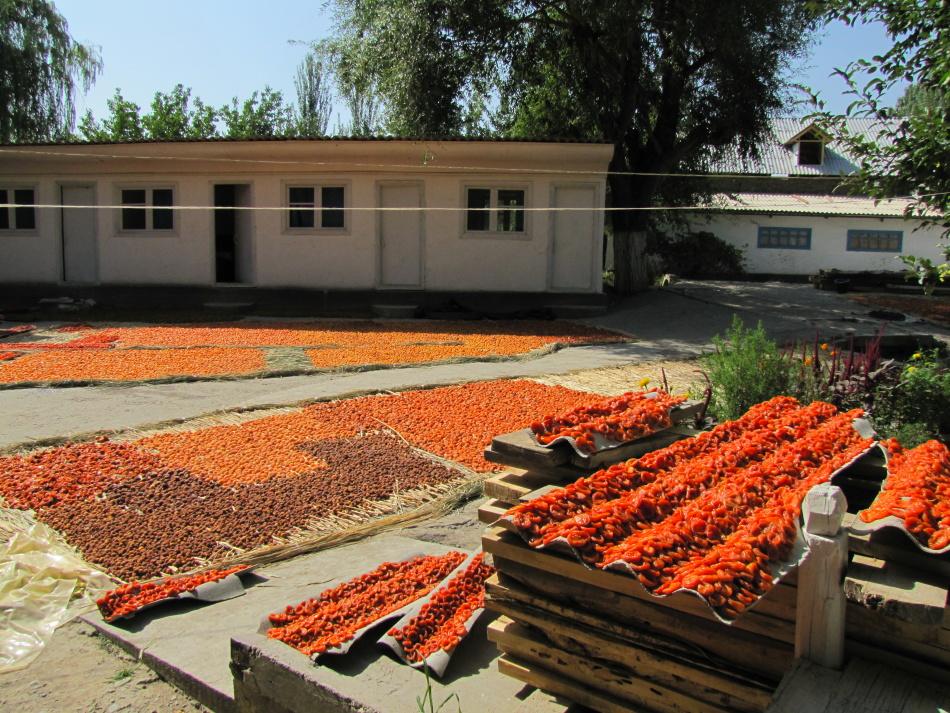 Для высушивания абрикос естественным методом требуется солнечная и жаркая погода