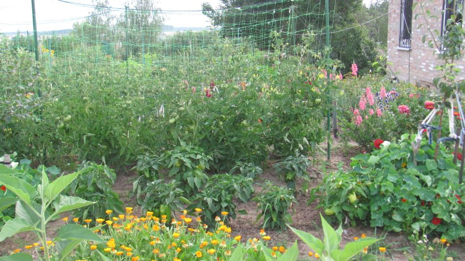 Отпугивающие совку растения