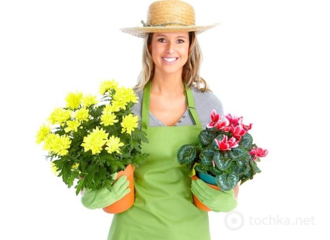Благоприятные дни для комнатных растений и цветов в апреле
