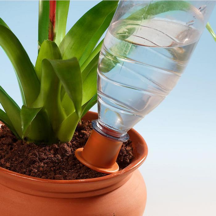 Поливалка из пластиковой бутылки