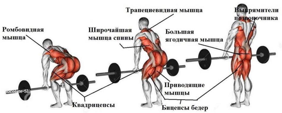 Как работают мышцы при поднятии штанги?