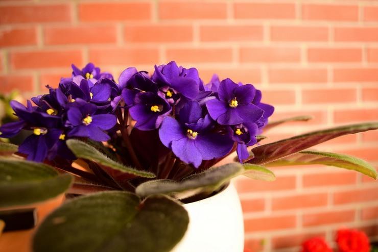 О цветке