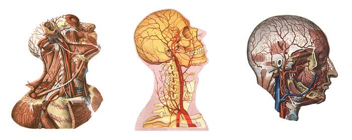 Каковы причины возникновения головной боли в затылке?