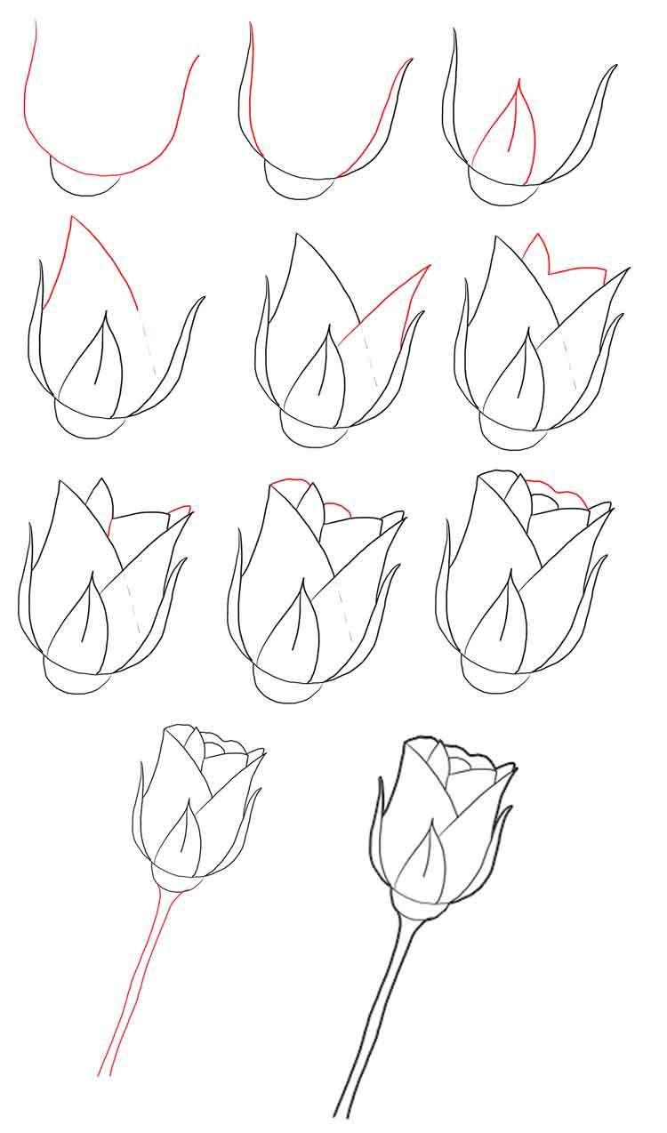 buton-rozi-karandashom Как нарисовать розу карандашом поэтапно для начинающих? Розы: рисунок карандашом