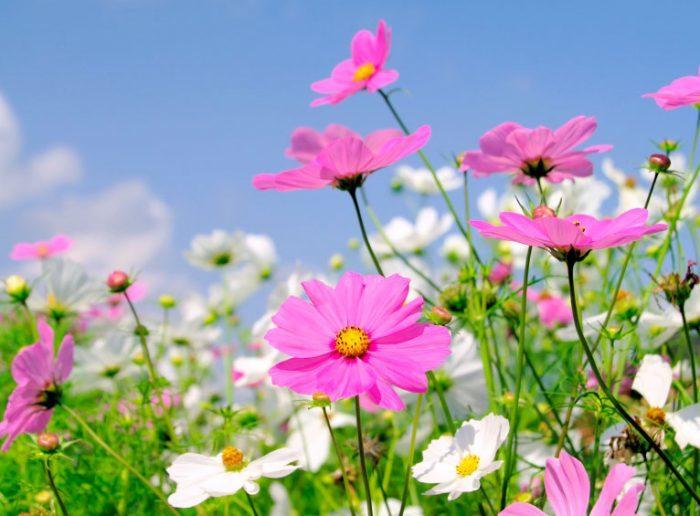 Яркий цветочек