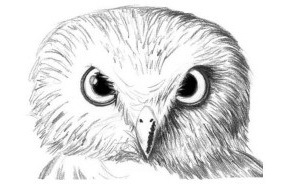 ispolzuite-tverdie-karandashi-chtobi-dobavit-bolshe-shtrihov-na-vseh-uchastkah-golovi Как рисовать сову карандашом поэтапно для начинающих и детей? Как рисовать по клеточкам сову, красками?
