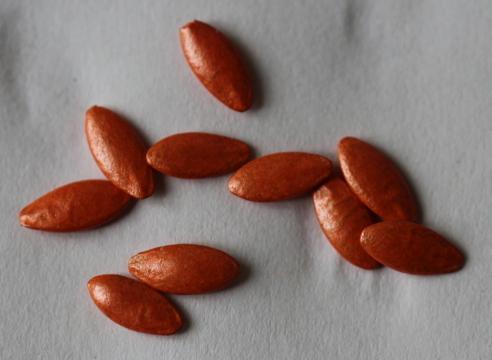 Заранее обработанные семена огурцов имеют цветную окраску и не нуждаются и сразу готовы к высадке