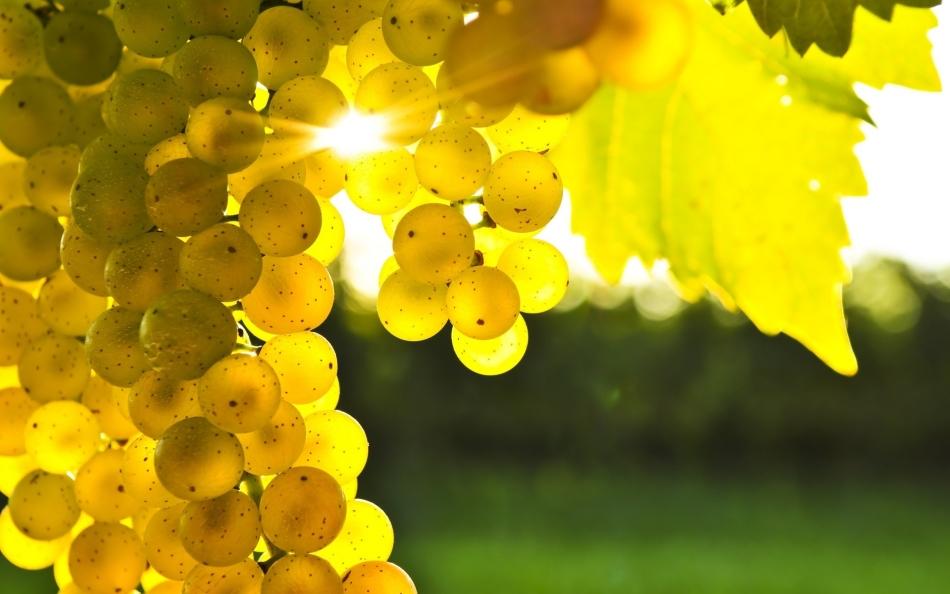 Увидеть во сне, как виноград переливается на солнце - добрый знак для женщины