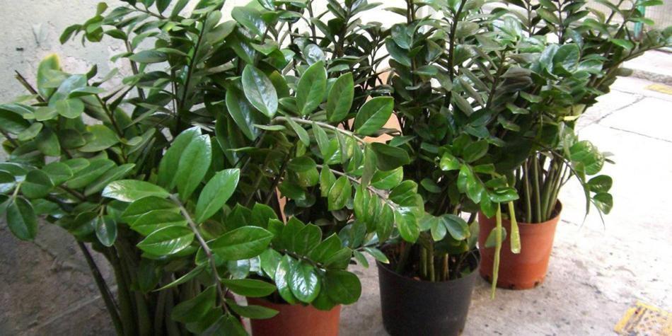 Хорощие удобрения добавят растению несколько десятков сантиметров в росте