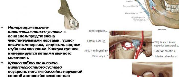 Движение кровотока в нижне-челюстном узле