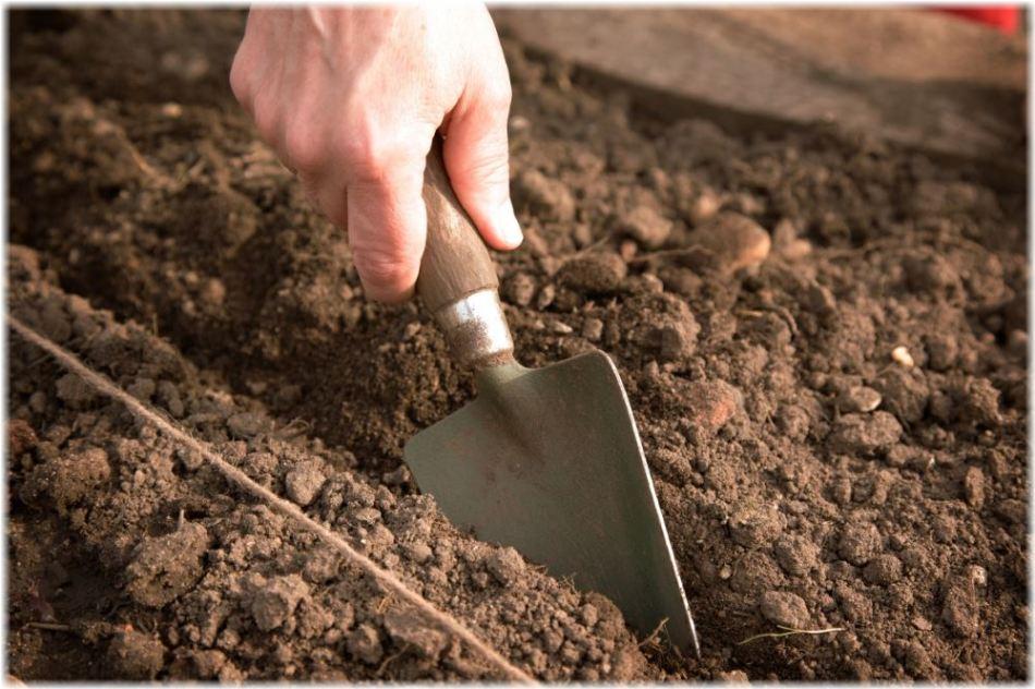 Осенняя подготовка грунта под посев рассады цветной капусты
