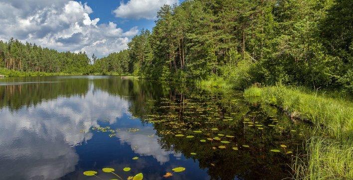 Выезд в лес и подъезд к водоему в 2020 году запрещен