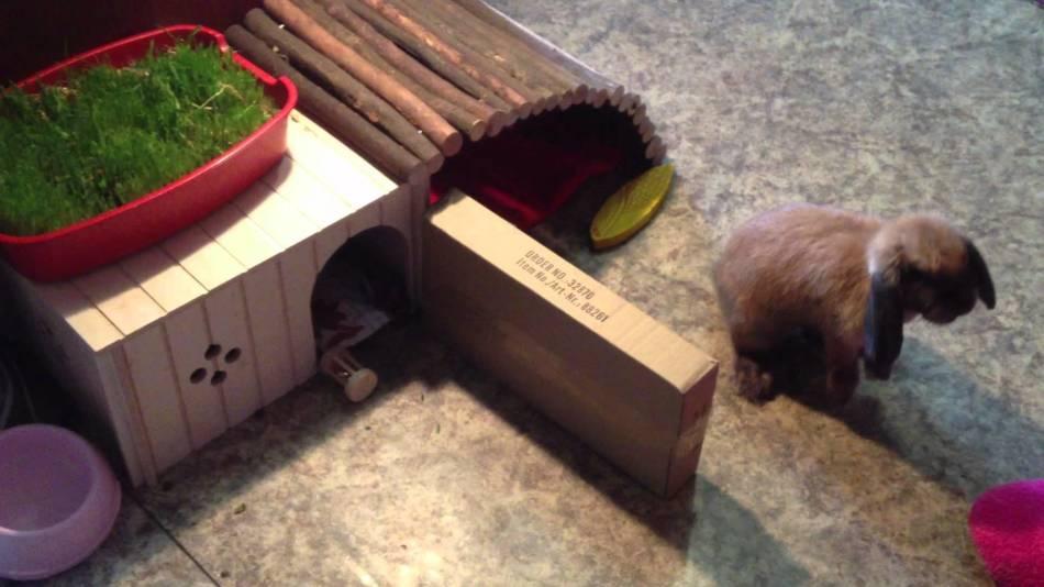 Декоративные кролики любят играть