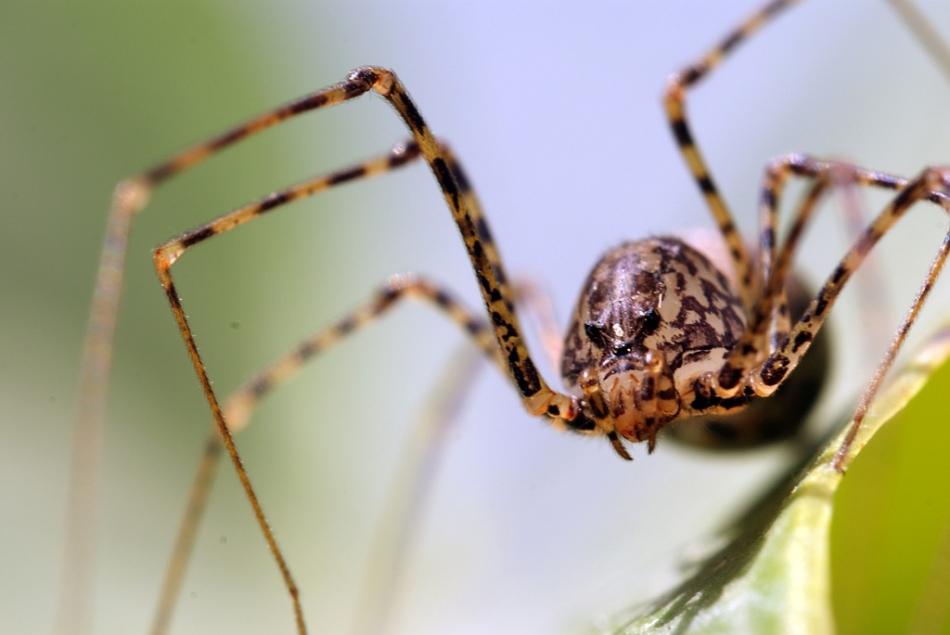 Как избавиться от пауков на окнах снаружи