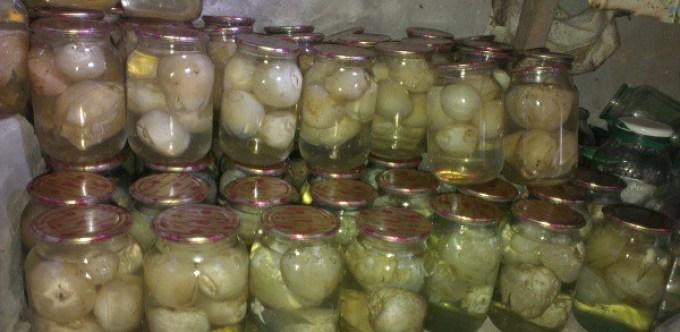 Из гриба веселки готовят спиртовую настойку.