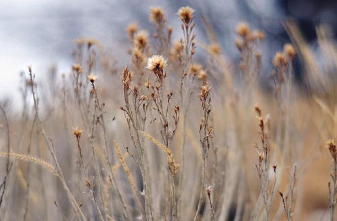 Заговор на сухую траву