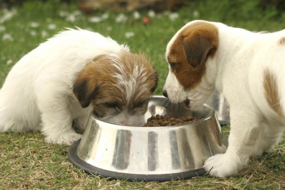 Сбаллансированное питание - один из методов профилактики рахита у собак