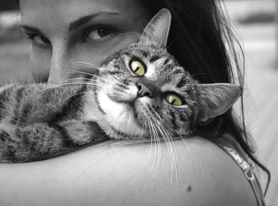 Здоровый кот может иметь неприятный запах изо рта